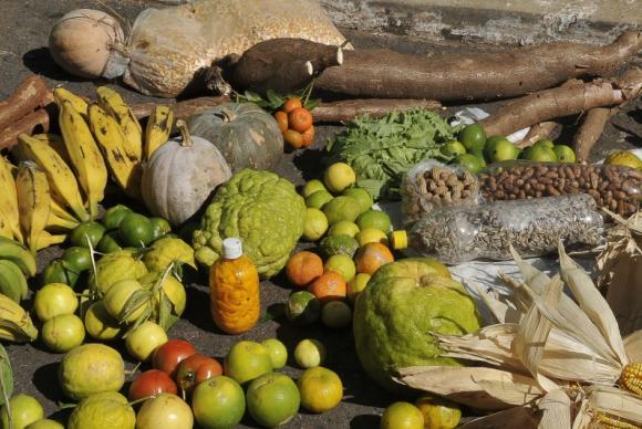 Preços mínimos para culturas de verão já estão em vigor