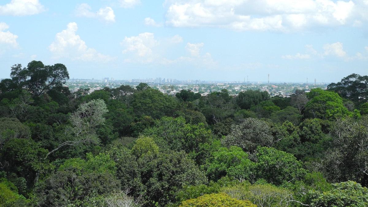 Instituições e movimentos sociais debatem no Inpa caminhos para a Amazônia até 2030